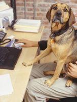 Cómo conectar una etiqueta a un collar de perro
