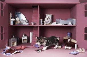Cómo manejar una traviesa del gato