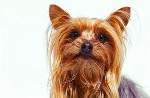 Los cochecitos para mascotas en Perros