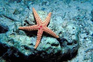 Cómo configurar un acuario de las estrellas de mar