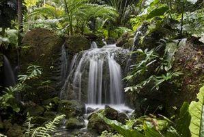 Siete cosas para salvar la selva tropical