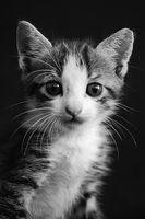 ¿Qué pasa cuando un gato tiene parásitos intestinales?