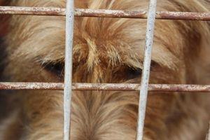 Cómo socializar a un perro adulto de una fábrica de cachorros
