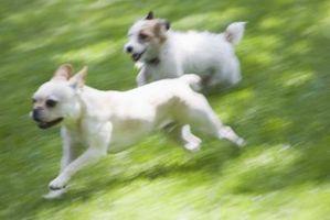 Cómo utilizar una cerca temporal como una zona para perros
