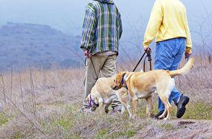 Cuál es el significado de Menea la cola en los perros?