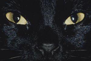 Los problemas oculares en un gatito Neutered