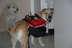 Como montar una Mochila Perro