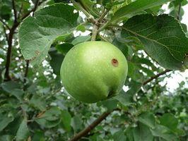 Uno tiene mala manzana todas las manzanas?