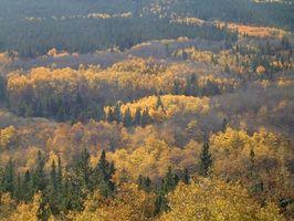 Datos de Colorado en el gobierno de las regiones terrestres