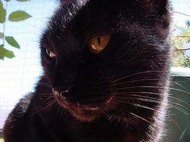 Cómo tratar las infecciones oculares en los gatos