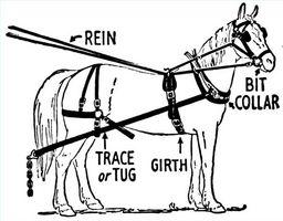 Como montar un caballo de arnés