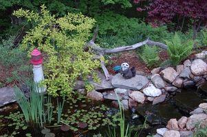 Cómo plantar plantas de agua en estanques de plástico