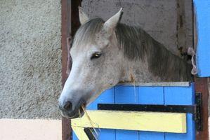 Cómo diseñar un caballo del granero