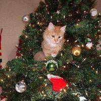 El cuidado de los gatos y gatitos