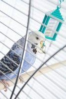 Cómo cortar las alas de un ave como mascota