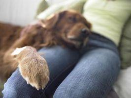 ¿Cómo puedo arreglar mi almohadillas de las patas del perro que están secos como papel de lija?