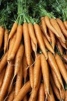 Como fermentar verduras de raíz