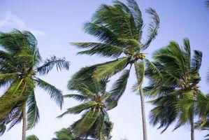 Cuál es la relación entre la dirección del viento y el tipo de masa de aire?