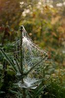 Las arañas comunes en Colorado