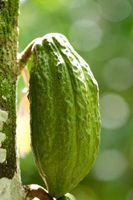 Lo que se necesita para hacer el chocolate de Cacao?