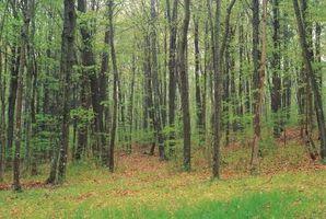Lugares que visitar en el condado de Bucks, PA