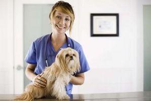 Los medicamentos esteroides para caninos Alergias