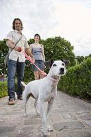Lo que debe recordar al llevar su perro a casa