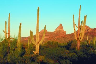 Norte americanos del desierto ecosistemas