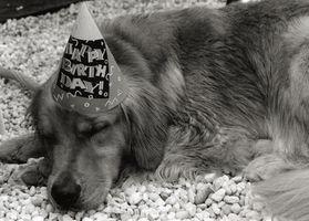 Cómo hacer sus propios pasteles perro sano