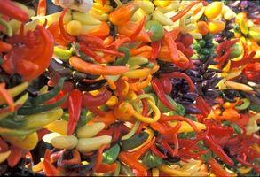 Los sustitutos para secadas Hot Chilis rojos en polvo de chile