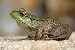 ¿Qué es el tiempo de vida de las ranas en la selva?