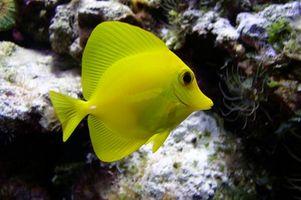 Cuál es la temperatura del agua salada para el pescado?