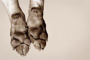 Cómo humedecer la piel seca en las patas de un perro