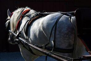 Cómo entrenar a un carro del caballo