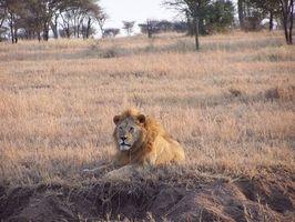 Cómo personalizar un safari africano para disfrutar de una amplia gama de actividades