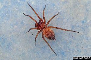 Cómo identificar las arañas en el este de Oregón