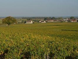 Vacaciones Wine Tours en Francia