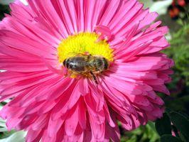 Alternativas a Azúcar Agua para la alimentación artificial de abejas