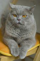 La forma natural de elimate olor de la orina del gato