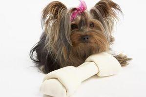 ¿Cómo de entrenar a un cachorro Yorkie taza de té