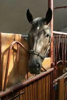 Cómo entrenar a un caballo Desde el inicio