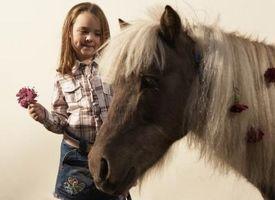 Cómo hacer Parade Ramos de flores para un caballo