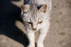Cómo domesticar a un gato perdido y abandonado