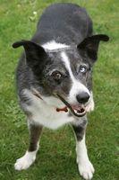 Indiana Las leyes sobre perros ladrando