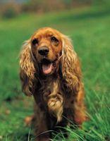 El exceso de la Contra-ungüentos para los ojos para perros