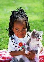 La crianza de un gatito friendly