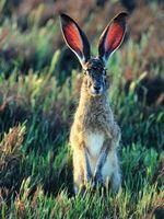 Cómo alimentar a los conejos del desierto