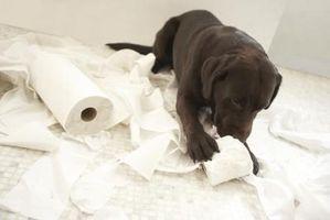 Los cachorros pueden comer Láminas de masticar?