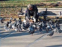 Lo que no debe alimentar a las palomas