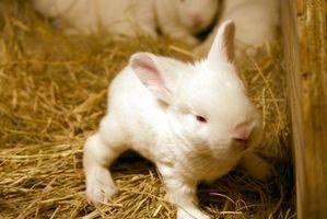 Ideas para jaulas de conejo al aire libre